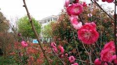 2015年春季校yuan花