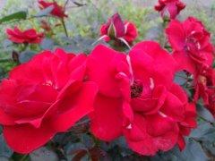 2012年夏季花卉